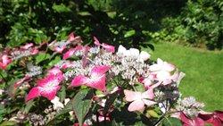 Parcs et jardins de seine maritime ouverts au public for Beaumont le hareng jardin de bellevue